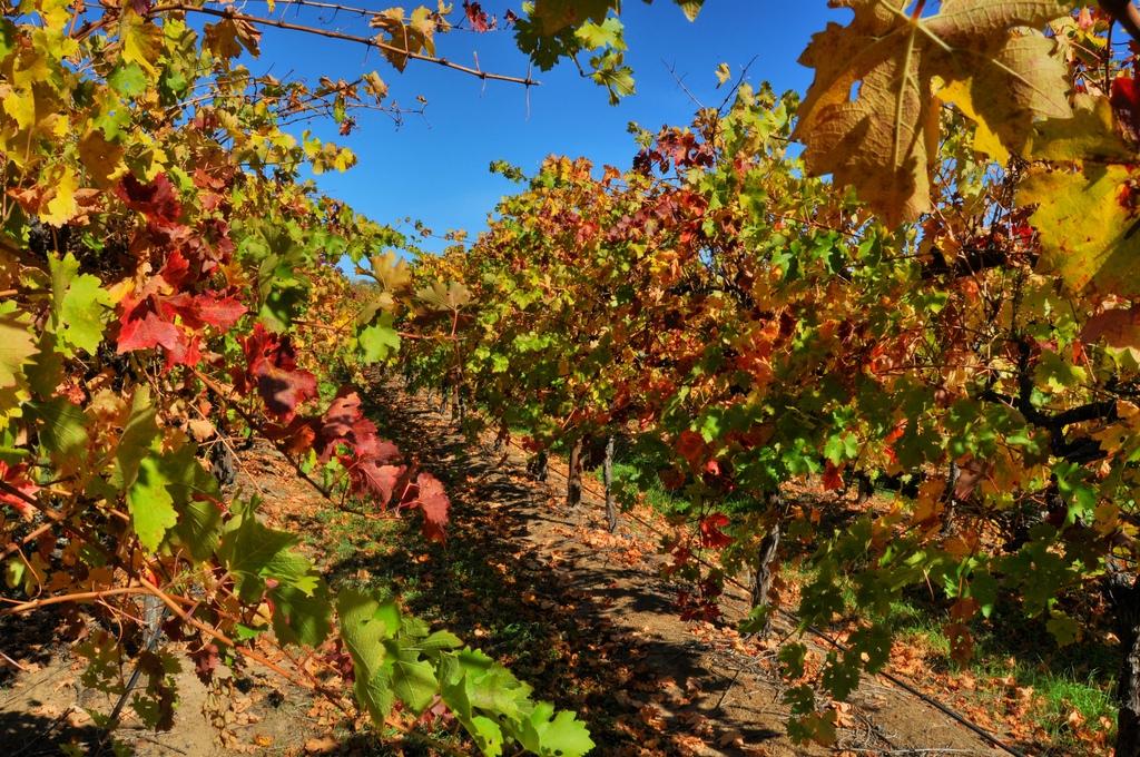 Australian Wine Industry Uncorked